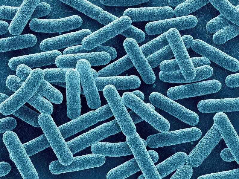 Escherichia Coli, causas y remedios